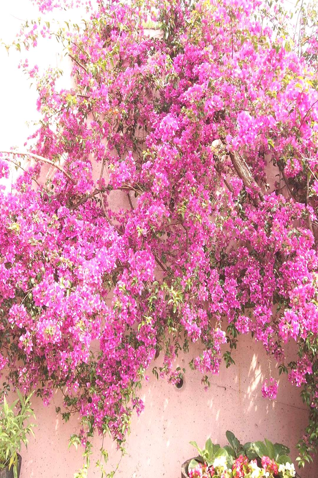 on June 02 2020 plant flower tree outdoor and nature